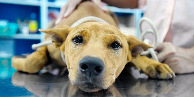 rapid kaalulangus koer parim rasva poletusvoond