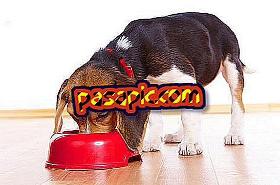 kuidas ravida koerte kaalulangust slimming r-shaper
