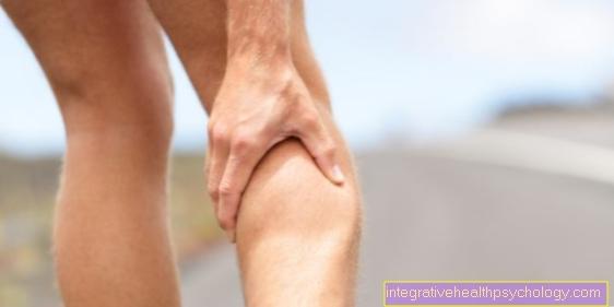 rasvapadi kaotus jalgsi